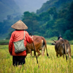 Thailand's industry is moving from agricultural to industrial.